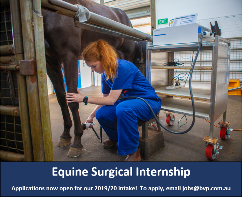 Equine Surgical Internship 2019/20