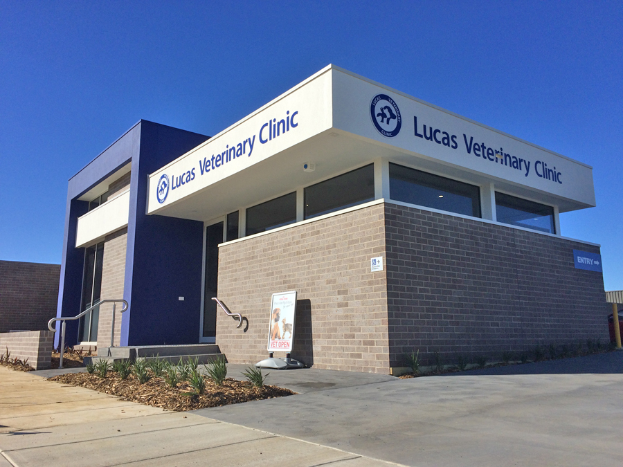 News | Ballarat Veterinary Practice